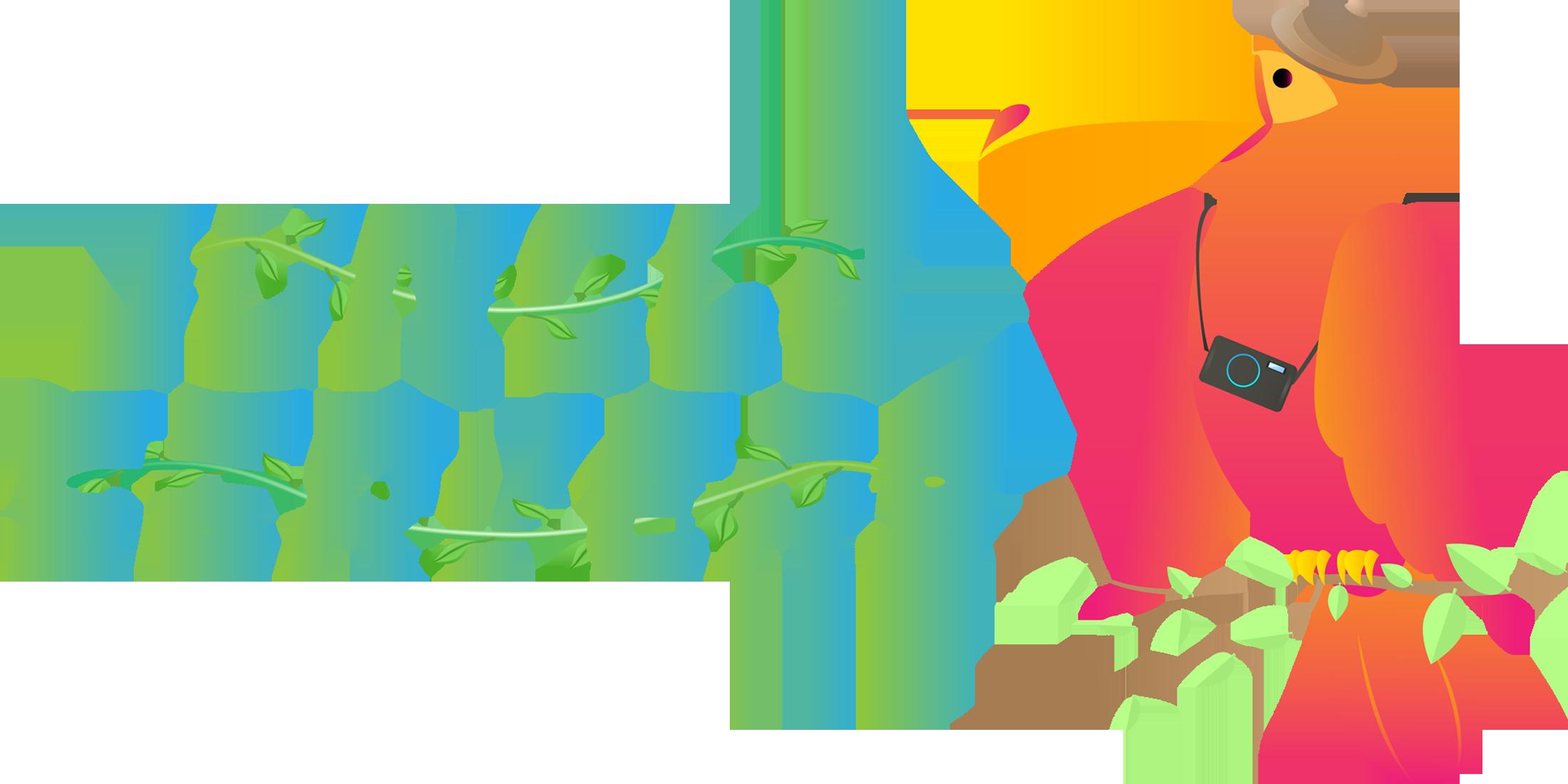 Jungle Servers